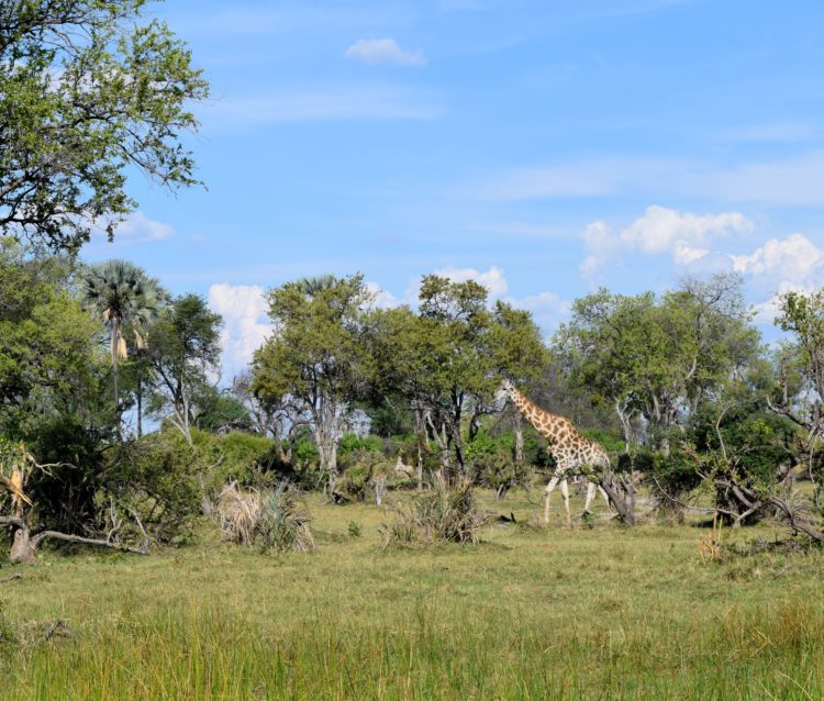 A Tale of Two: Botswana 5